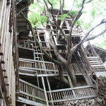 Giant_Tree_House_Horace_Burgess_Subtielman04